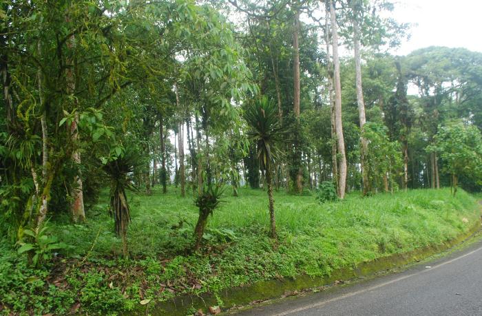 Bosque Protector Santa Rosa
